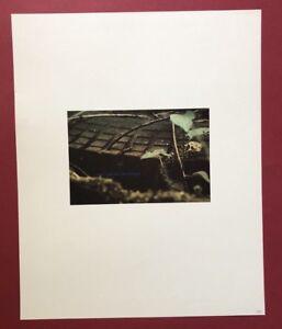 Lothar-Baumgarten-Antizipierte-Guerteltiere-Offset-1983-signiert-und-datiert