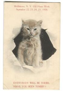 Postcard-Cat-Middletown-NY-Old-Home-Week-1908