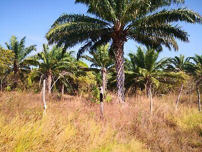 Rancho de 100 hectáreas en la Huleria Balancan