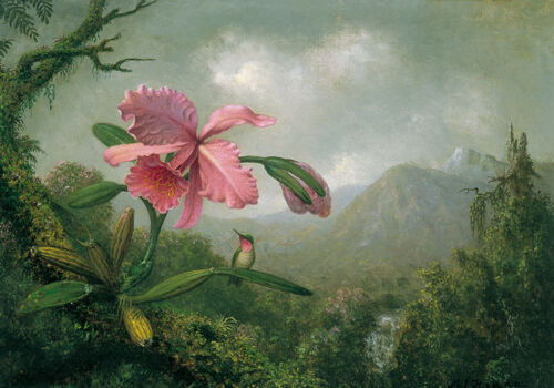 19th C Painting Flowers Master Still Life Orchards Humming Bird Canvas Print