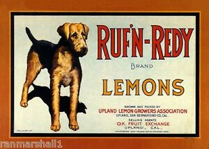 Upland Rufn Redy Airedale Terrier Dog Lemon Citrus Fruit Crate