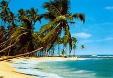 SUDSEE IDEAL DECOR PALM TREE WALL MURAL; BEACH OCEAN TROPICAL