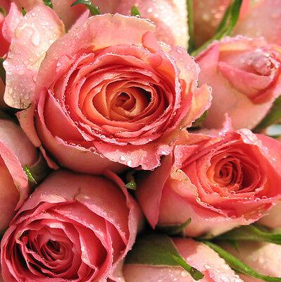 GLASBILDER DEKO WAND BILD DECO FLOAT GLAS ROSE BLUME ROSEN BLÜTE PFLANZE NATUR