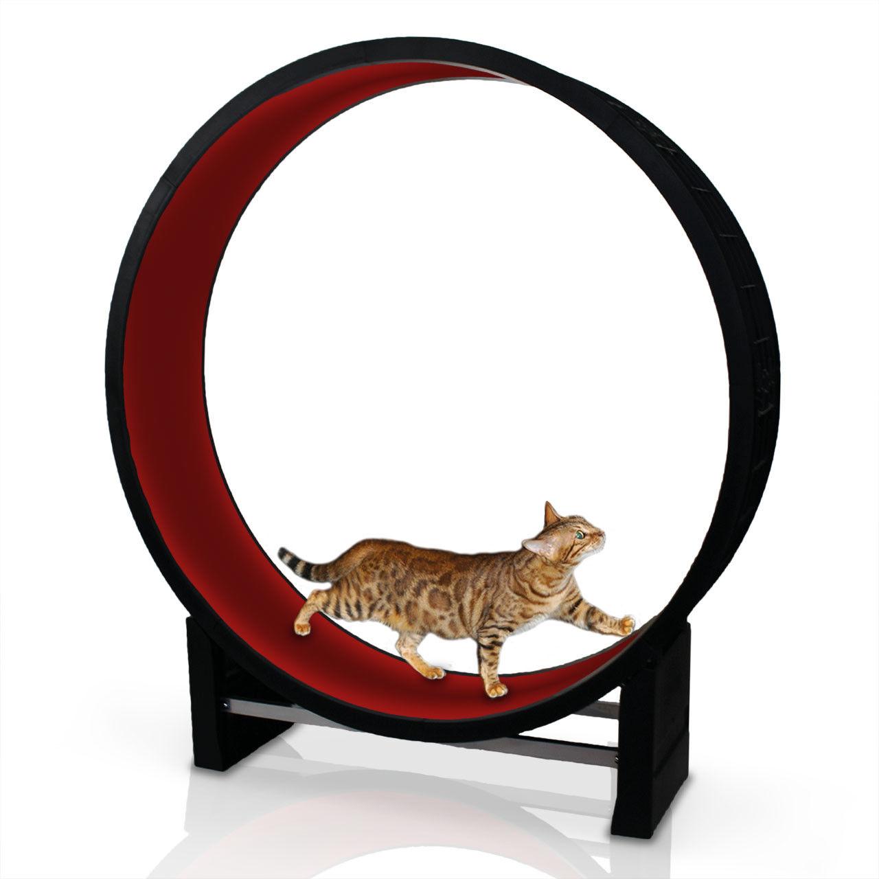 Katzenlaufrad - rot, das Katzenspielzeug für ausreichend Auslauf & Fitness