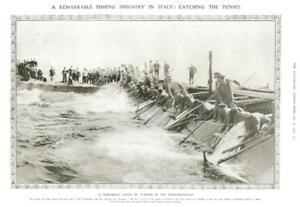 1908-Antique-Print-ITALY-Tunny-Fishing-Industry-Mediterranean-Men-Nets-261