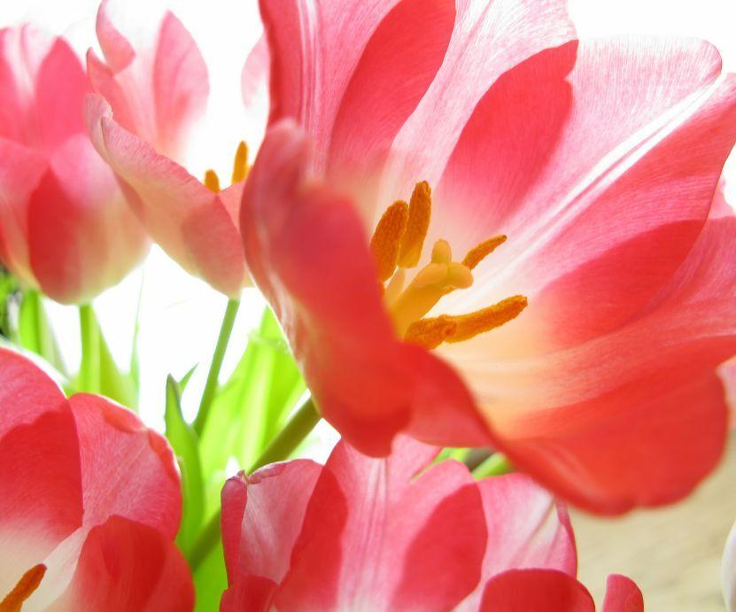 3D Dazzling Fleur 4 Photo Papier Peint en Autocollant Murale Plafond Chambre Art