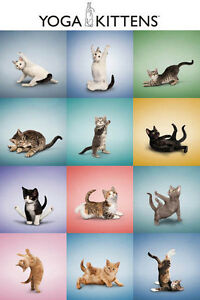 KITTENS-IN-YOGA-POSES-CUTE-CATS-91-x-61-MM-36-x-24-034-ANIMAL-POSTER