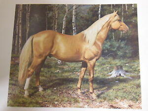 Carl Brenders Blonde Beauty Palomino Horse Print Signed Numbered
