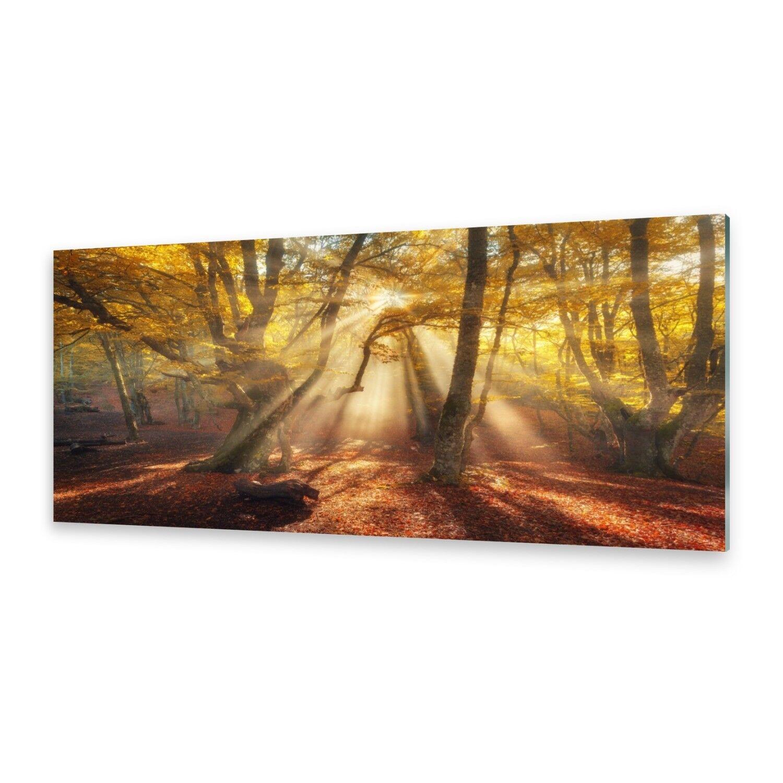 Immagini di vetro Muro Muro Muro Immagine Stampa su vetro magico bosco 435fd0