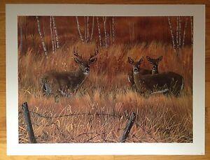 Ducks-Unlimited-Whitetail-Deer-Print-1997-Doug-Berg-signed-Animals-Prints-WI