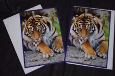 NEW LOT OF 2 BIRTHDAY GREETING CARDS ART TIGER WILD ANIMAL 2 WHITE ENVELOPES