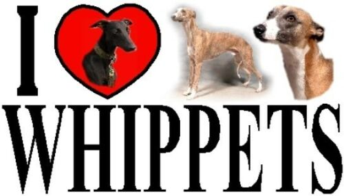 Featuring the Whippet I LOVE WHIPPETS Car Sticker By Starprint