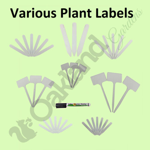 50 x Medium Tee Plant Labels White Stick In Plastic Markers Seed Tray SL200v