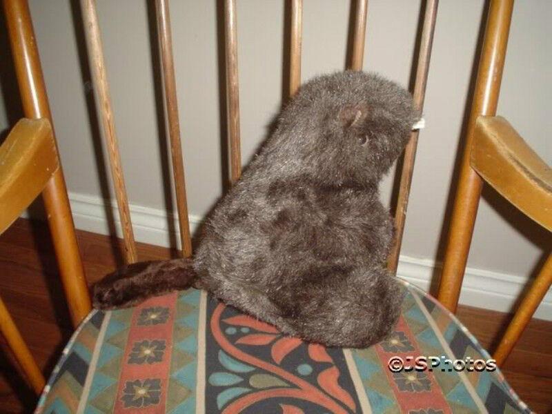 Friends of Trent Severn Waterway Canadian Beaver Plush RARE 10 Inch