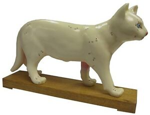 Educational Acupuncture Cat Anatomy Medical Veterinary Model XC 605 ...
