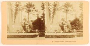 Brasil Rio de Janeiro Jardin Botanico Foto Estéreo PL55L6n Vintage Albúmina