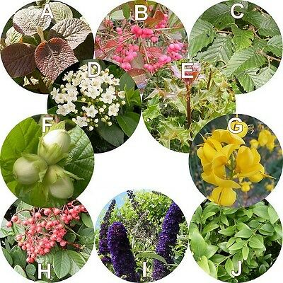 Haie champêtre en kit de 10 arbustes