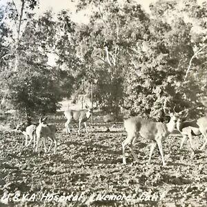 Livermore CA USVA Hospital The Deer Card Picture RPPC Postcard