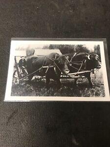real-photo-Postcard-Kid-Farmer-With-Two-Big-Bulls-Oakburn-Manitoba-A1
