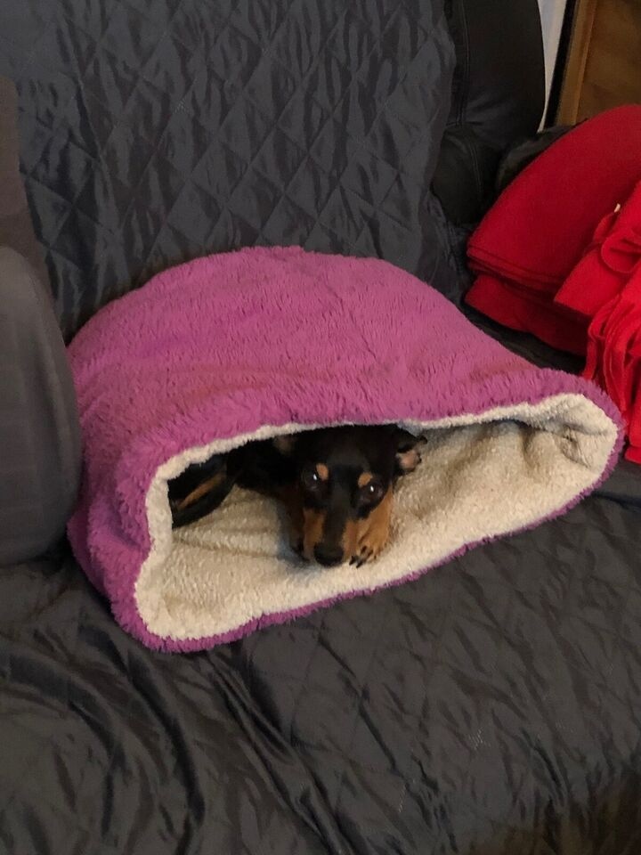 HJÆLP  Da min hund elsker denne pose og ikke ka...