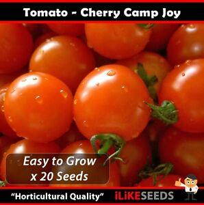 Tomato-034-Cherry-Camp-Joy-034-HEIRLOOM-20-Seeds-Minimum-Vegetable-Garden-Plants