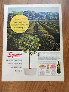 Squirt citrus soda