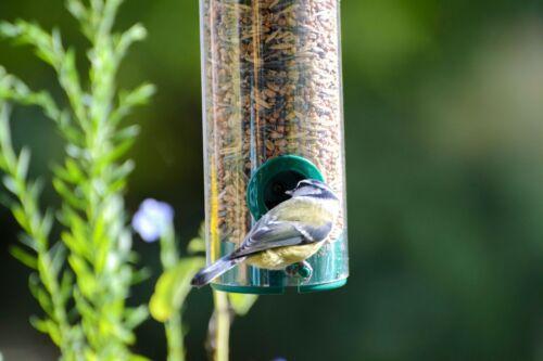 Futterspender Wildvögel aus Kunststoff mit 2 Anflugstangen Futtersäule grün