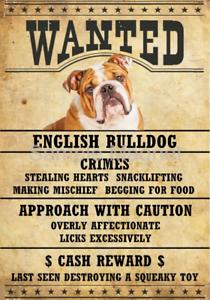 """ENGLISH BULLDOG Wanted Poster Fridge Dog Magnet LARGE 3.5/"""" X 5/""""  #2"""