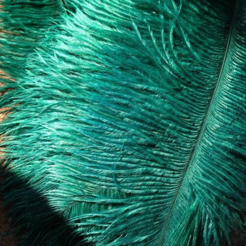 Teal Ostrich Feathers 18-20 inches 5 Pieces GA, USA