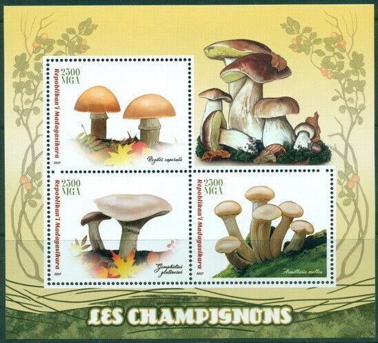 2017 Champignons Champignons