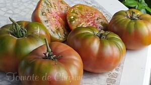 10-graines-de-tomate-Wild-Thyme-C-039-est-une-beaute-rare-heirloom-tomato-meth-bio