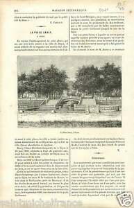 Place-Darcy-a-Dijon-Bourgogne-France-GRAVURE-ANTIQUE-OLD-PRINT-1886