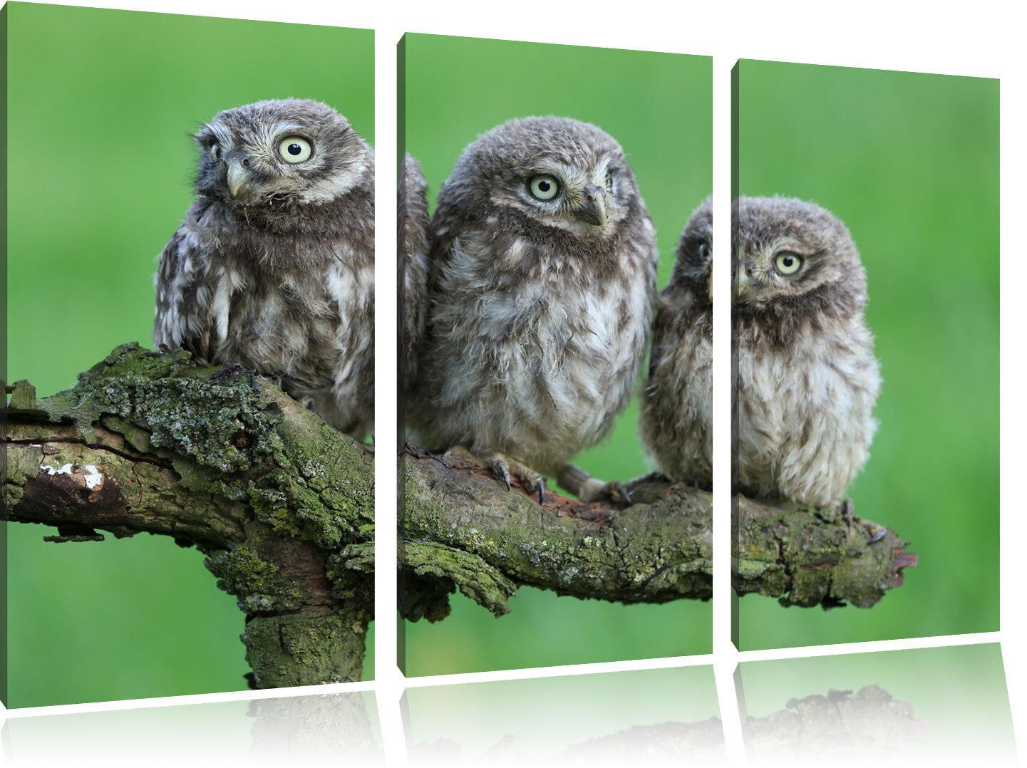 Tre Tre Tre GUFI SU AST 3-Divisorio Tela Decorazione stampa d'arte f263c6
