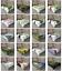 Ambesonne-Tree-Bloom-Flat-Sheet-Top-Sheet-Decorative-Bedding-6-Sizes thumbnail 2