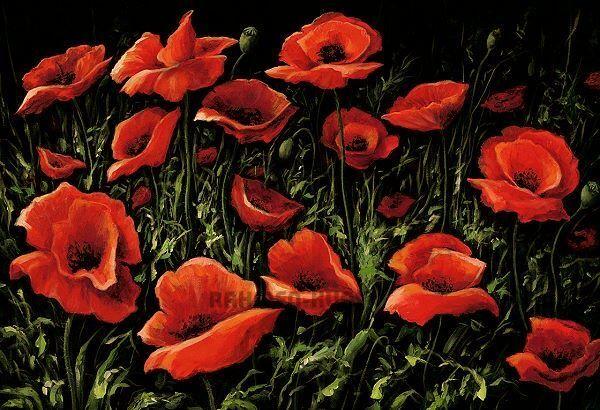 A.S. Mezzanotte Poppies Fiori di papavero 65X95 STAMPA SU TELA CON TELAIO