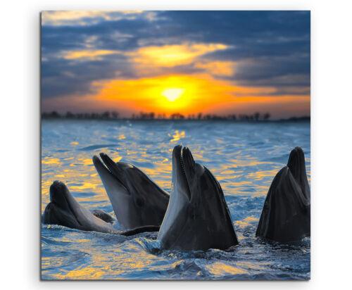 Delfine im Wasser Sonnenuntergang Wandbild auf Leinwand in verschiedenen Größen