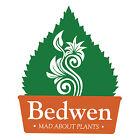 bedwenplants