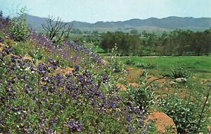 Postcard-WildFlowers-In-Bloom