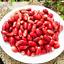 10 Pcs Seeds Synsepalum Dulcificum Fruit Bonsai Red Secret Fruit Free Shipping B