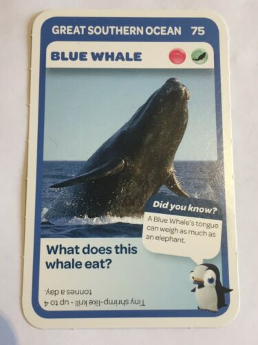 Taronga Zoo Woolworths Aussie Animal Card #75 Blue Whale