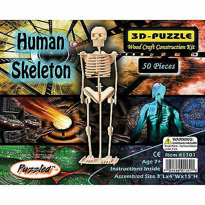 Woodcraft Construction Kit 3d Puzzle Human Skeleton 50 Pcs for sale online  | eBay