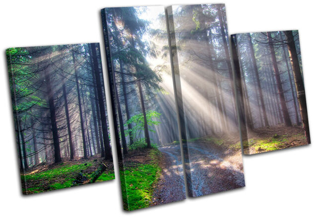 Forest Landscapes MULTI CANVAS WALL ART Picture Print VA