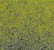 NOCH 50210 Frühlingswiesen-Gras 100 g, Beutel