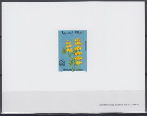 Morocco Sc825 Flower, Lupinus Luteus, Deluxe Proof