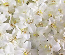 Rice white cymbidium orchid Head Artificial Silk Flower Head Wedding 10pcs