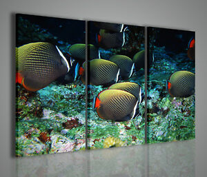 Quadri moderni tropical fish quadro moderno pesci acquario for Arredamento acquario