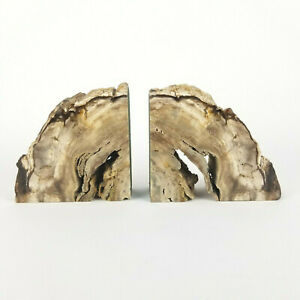 Mid Century Bookends Petrified Wood XL Amazing HEAVY 19lbs Holes Tan White Vtg
