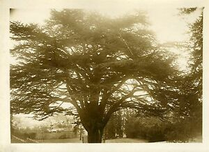 """""""Fête du Cèdre MONTIGNY-LENCOUP 1931"""" Photo originale G. DEVRED - Agce ROL iDzPhKB8-08031430-935247996"""
