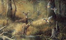 October Memories Deer Ducks Hunting Scene Wallpaper Wall Mural 13u0027 8 Part 47
