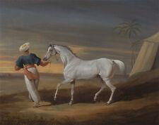 Signal, a Grey Arab, with a Groom in the Desert David Dalby Pferd B A3 00117